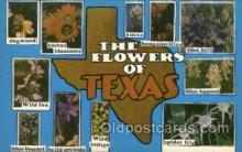 LLS001630 - Texas Large Letter State States Post Cards Postcards