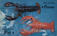 lob001003 - Maine Lobster Lobster Postcard Postcards
