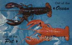 lob001007 - Lusterchrome Lobster Postcard Postcards