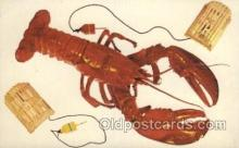 lob001011 - Rhode Island Lobster Postcard Postcards