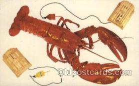 lob001011 - Rhode Island Lobster Postcard Postcards