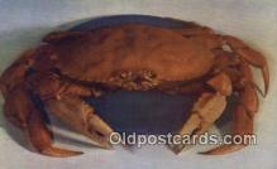 lob001021 - Jombo Humboldt Crab, Weatherby's Sea Food Restaurant  Postcard Post Card, Carte Postale, Cartolina Postale, Tarjets Postal,  Old Vintage Antique