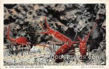 lob001042 - Spiny Lobsters New York Aquarium Postcard Post Card