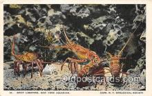 lob001047 - Spiny Lobsters New York Aquarium Postcard Post Card