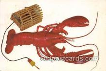 lob001051 - Maine Lobster  Postcard Post Card