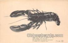 lob001079 - We'll Eat The Best, Lobster Shell  Postcard Post Card