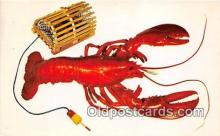 Maine Lobster