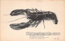 lob001091 - We'll Eat The Best, Lobster Shell  Postcard Post Card