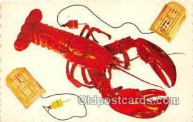 lob001095 - Homard Geant Lobster King Postcard Post Card