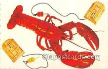 lob001098 - Maine Lobster  Postcard Post Card