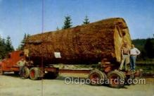 log001011 - Giant fir log Logging Postcard Postcards