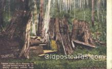 log001022 - Largest Stump  Postcard Post Cards Old Vintage Antique