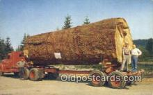 log001025 - Giant Fir Log Oregon, USA Postcard Post Cards Old Vintage Antique