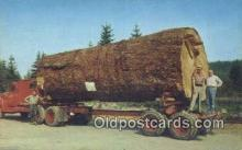 log001076 - Giant Fir Log  Postcard Post Cards Old Vintage Antique