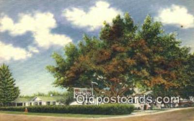 MTL001931 - Shady Nook Cottages, St. Petersburg, FL, USA Motel Hotel Postcard Post Card Old Vintage Antique
