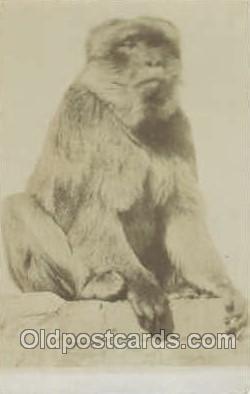 mky001002 - Monkey, Monkeys Postcard Postcards