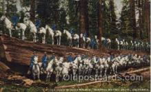 mil002020 - US Cavalry on Fallen Monarch, Mariposa Big Tree Grove, California, USA, Military Postcard Postcards