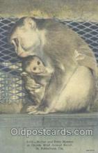 mky001004 - Florida Wild Animal Ranch, St. Petersburg, Florida USA, Monkey, Monkeys Postcard Postcards