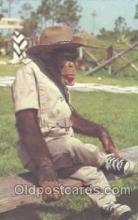 mky001005 - Lion Country Safari, Monkey, Monkeys Postcard Postcards