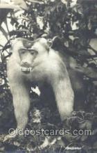 mky001011 - Monkey, Baboon, Monkeys, Gorilla, Gorillas Postcard Postcards