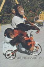 mky001014 - Monkey Jungle, South of Miami Florida USA, Monkey, Monkeys, Gorilla, Gorillas Postcard Postcards