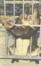 mky001026 - Monkey Jungle, Miami Florida USA, Monkey, Monkeys, Gorilla, Gorillas Postcard Postcards