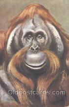 mky001029 - Monkey, Monkeys, Gorilla, Gorillas Postcard Postcards