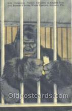 mky001031 - Ringling Bros.& Barnum Bailey, Sarasota,  Florida, USA Monkey, Monkeys, Gorilla, Gorillas Postcard Postcards