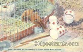 mky001038 - Parrot Jungle, Miami Florida, USA, Monkey, Monkeys, Gorilla, Gorillas Postcard Postcards