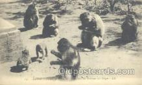 mky001041 - Monkey, Monkeys, Gorilla, Gorillas Postcard Postcards