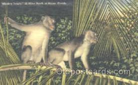 mky001042 - Monkey Jungle, Miami Florida USA, Monkey, Monkeys, Gorilla, Gorillas Postcard Postcards