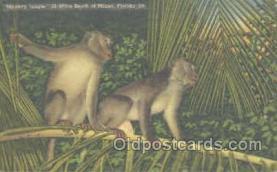 mky001045 - Monkey Jungle, Miami Florida USA