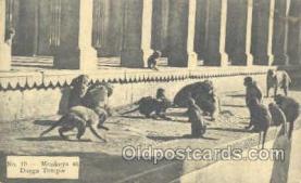 mky001046 - Monkeys at Durga Temple, Monkey, Monkeys, Gorilla, Gorillas Postcard Postcards