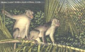 mky001048 - Monkey Jungle, Miami Florida USA, Monkey, Monkeys, Gorilla, Gorillas Postcard Postcards