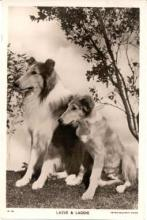 mov570002 - Lassie & Laddie Actor / Actress Postcard Post Card Old Vintage Antique Movie Star