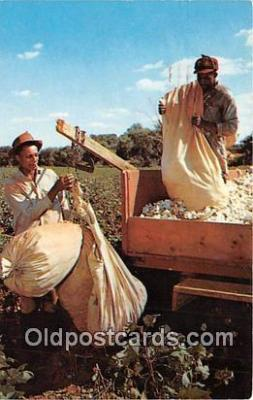 Weighing Sack of Cotton