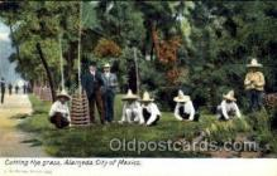 ocp001008 - Alameda, City of Mexico, Occupational Postcard Postcards