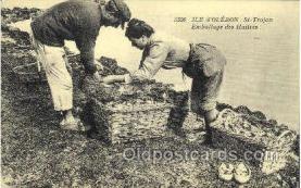 ocp001019 - Ile d'oleron, St-Trojan, Occupational Postcard Postcards