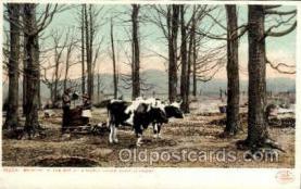 ocp001036 - Maple Sugar Camp, Vermont, USA, Occupational Postcard Postcards