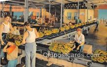 ocp100120 - Unloading Bananas New Orleans Postcards Post Cards Old Vintage Antique