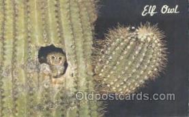 owl001022 - Elf Owl Postcard Postcard