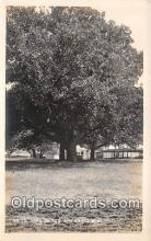 One of the Big Oak
