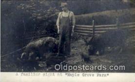 pig001005 - Pig, Pigs, Postcard Postcards