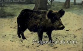 pig001011 - Pig, Pigs, Postcard Postcards