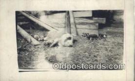 pig001018 - Pig, Pigs, Postcard Postcards