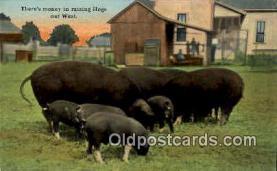 pig001033 - Pig, Pigs, Postcard Postcards