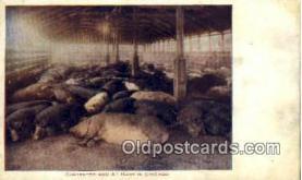 pig001040 - Pig, Pigs, Postcard Postcards