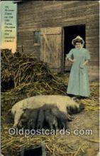 pig001046 - Pig, Pigs, Postcard Postcards