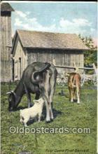pig001049 - Pig, Pigs, Postcard Postcards
