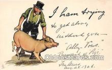 pig001061 - Ham  Postcards Post Cards Old Vintage Antique